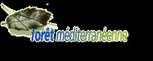 Foret-Mediteraneenne.png
